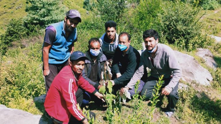 नवयुवक मंडल गांवसारी नें रौपे देवदार के पौधे