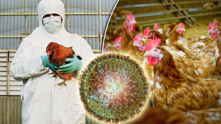 Status-of-Avian-Influenza-in-the-country