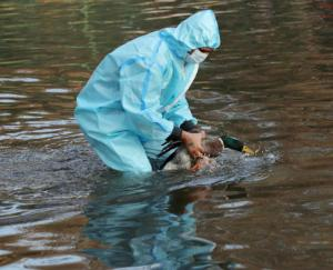 bird-flu-in-india-confirmed-cases-in-delhi-after-up-mp-seven-states