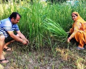 कृषक हितैषी योजनाओं का भरपूर लाभ उठा रहे हमीरपुर जिला के किसान