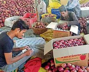 Himachal Pradesh gardeners will get expensive apple packing material