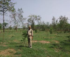 पर्यावरण संरक्षण की दिशा में निरंतर प्रयासरत वन मण्डल नालागढ़