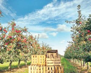 IIT Mandi to study packing of apples and kernels this year june 2021 13