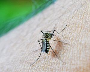 Threat of Zika virus looming amid Corona crisis in the country, alert in these states
