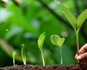 वर्ष 2021-22 में प्रदेश में रोपित किए जाएंगे एक करोड़ पौधे