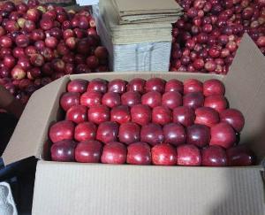 शिमला:  सेब बागवानों को महंगाई का झटका, ट्रकों से सेब ढुलाई 5 फीसदी महंगी