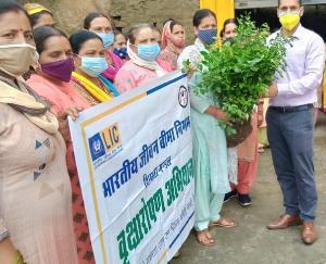 Padhar: Van Mahotsav celebrated in Mohaddhar
