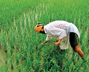 List of distribution of Prime Minister Kisan Samman Nidhi will be done in all the panchayats of the state