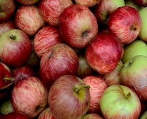 Adani, import or quality factor, why did apple prices fall?