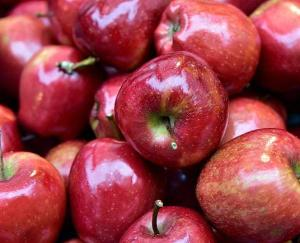 Shimla: The gardeners of Kotgarh will now save apples in packs of one kg, not in boxes