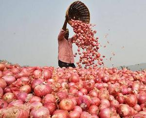 Onion-prices-may-increase