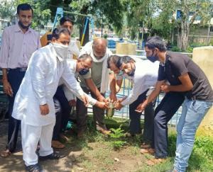 हमीरपुर कांग्रेस ने स्वतंत्रता दिवस पर किया पौधरोपण