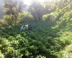 पलाशला गांव की ग्रामीण महिलाएं स्वयं सहायता समूह से जुड़ कर हो रहीं आर्थिक सशक्तिकरण की ओर अग्रसर