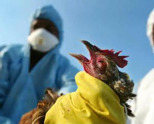 bird-flu-kya-hota-hai