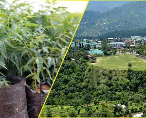 Open sale of plants to start in Nauni Univ from Jan 18