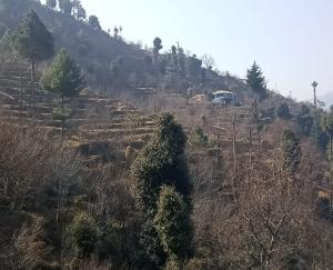 Disappointment on the face of farmer plantations due to no snowfall