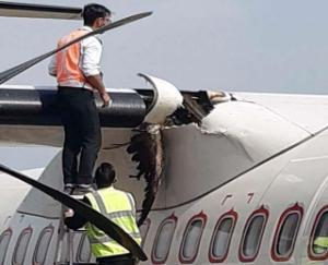 Birds crashed into aircraft during landing at Gagal