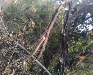 darlaghat-solan-news-himachal-9-april